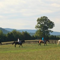 LAuberge_2010-activities-horse-955574692-O