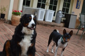 Dogs at a stunning Virginia Bed and Breakfast.