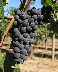 Pinot Camp and Wine Dinner at our Virginia Wine Country Inn