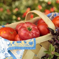 A basket of fresh tomatoes