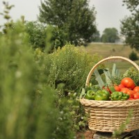 A basket of garden produce