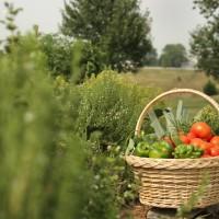 garden-produce-289512335-O
