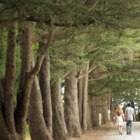 Trees line a path