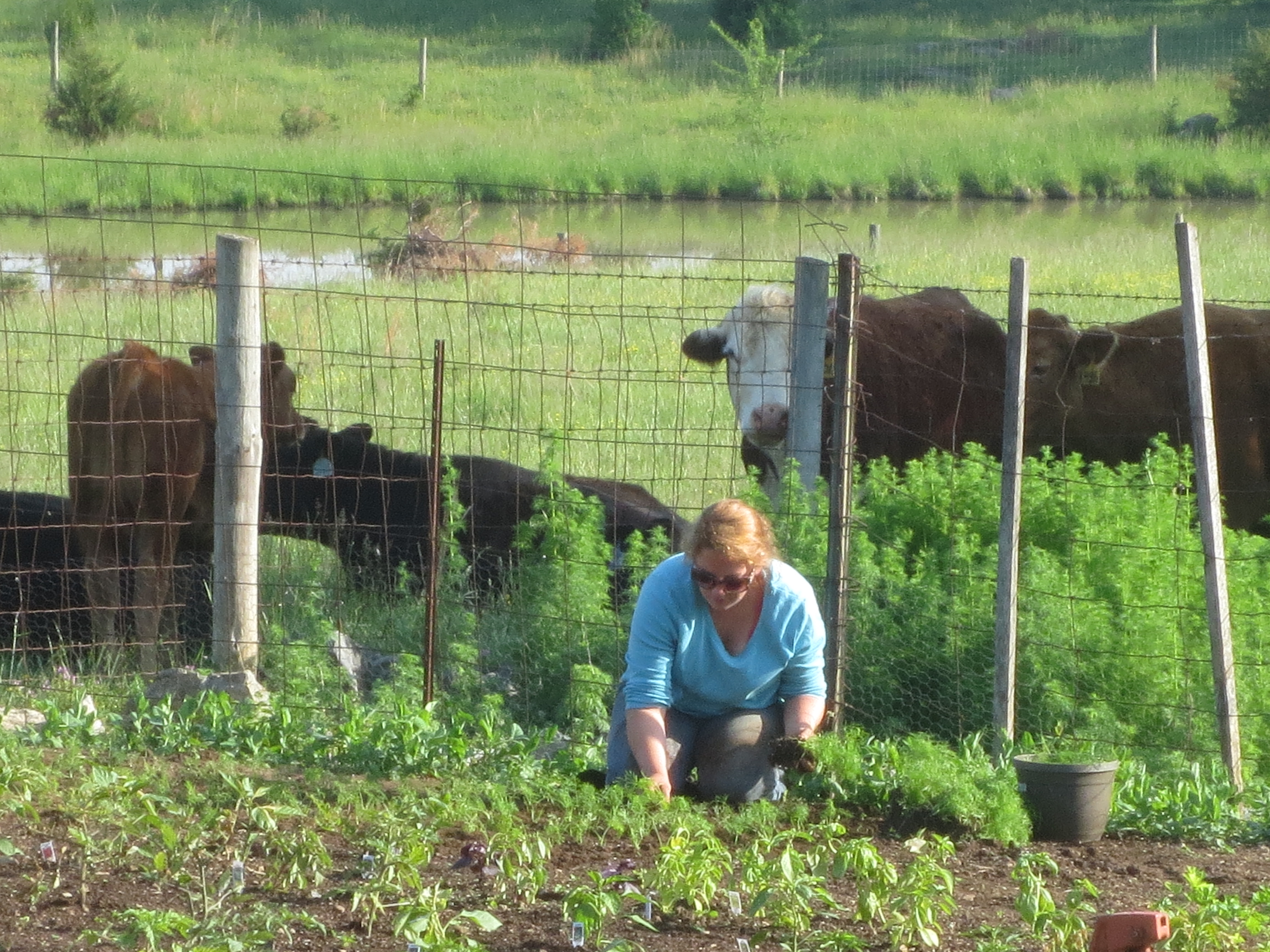 Shenandoah Valley Farm To Table