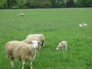 Shenandoah Valley farm
