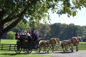 Horse-Drawn Carriage Rides in Virginia