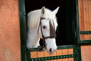 Horse Show in Virginia
