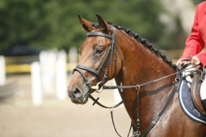 Check out the Upperville Horse Show on your spring Virginia getaway.