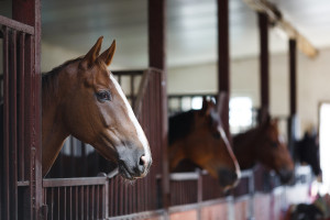 Shenandoah Valley guests love enjoying local horse events.