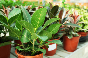 Visit the biggest plant sale in the area this spring while vacationing in Virginia.