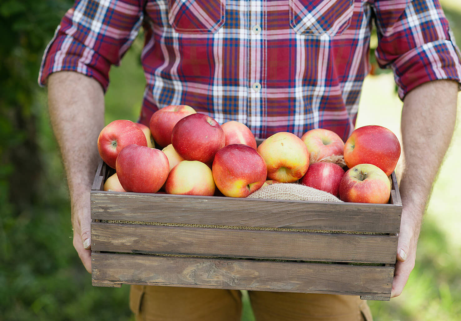 Man holding a box of apples at an orchard