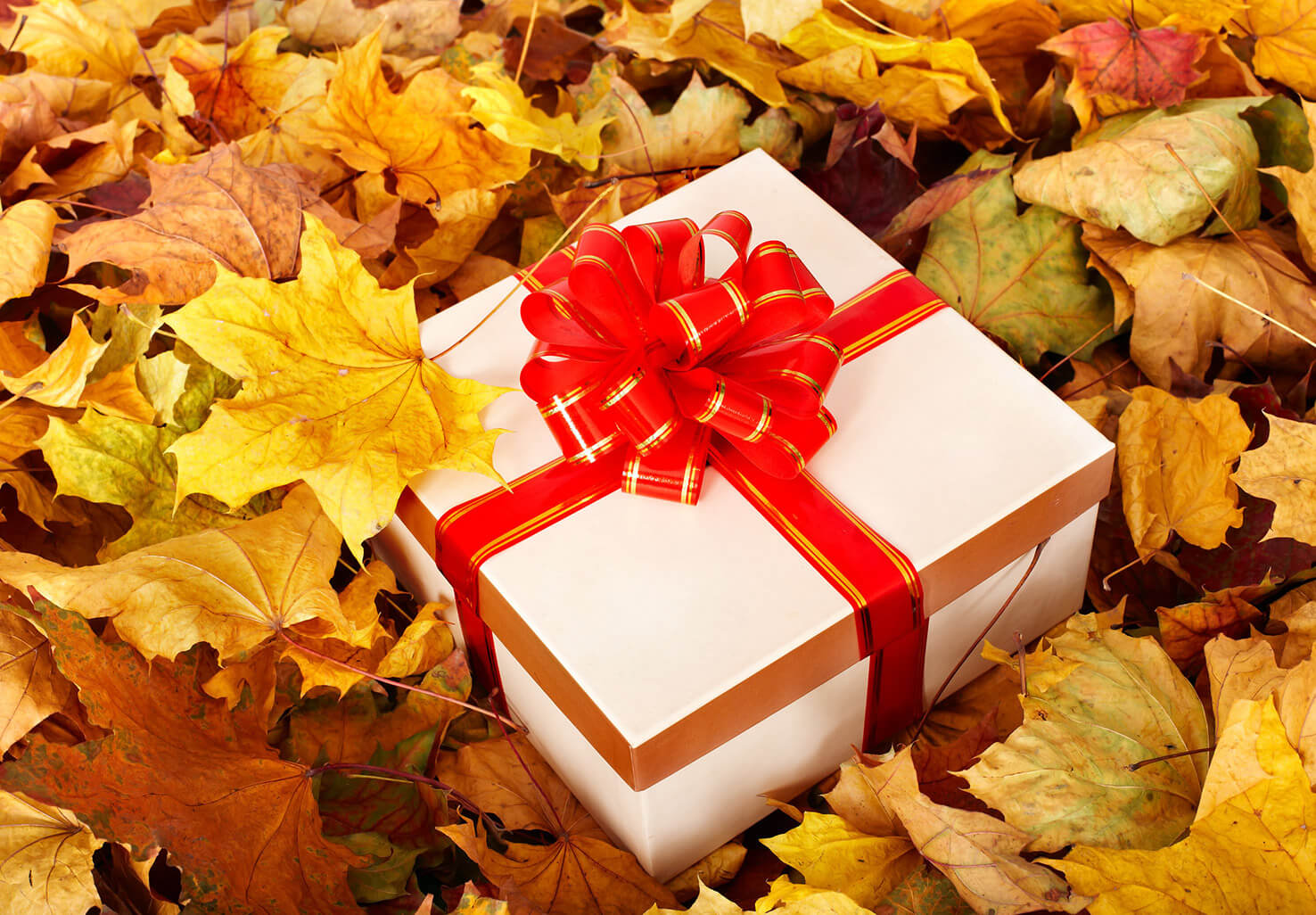Gift box in fall leaves