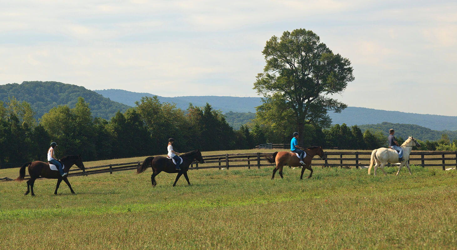A Group Horseback Riding in VA