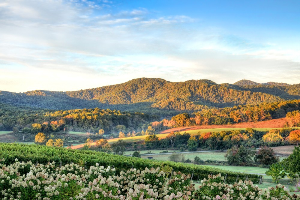 Virginia wine country in the fall