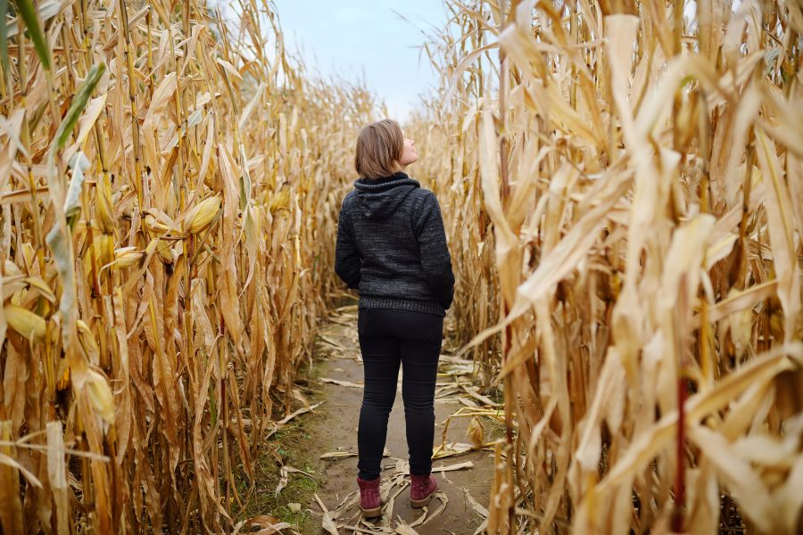 corn maze on a Shenandoah fall getaway